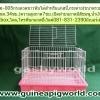 กรง Cage-005