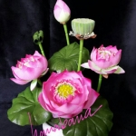 Flower-Hanbana เล็ก
