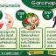 Garcinap สุดคุ้ม 3 กระปุก thumbnail 3